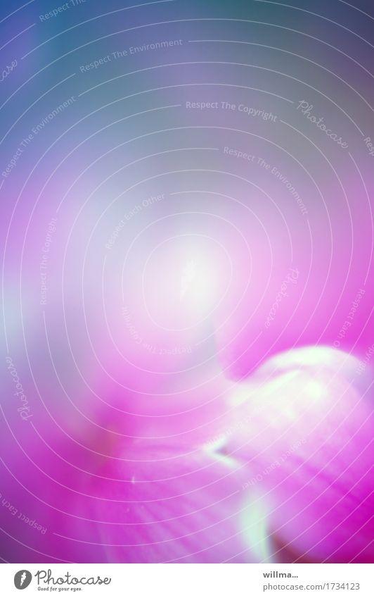 fruchtig-frisch Pflanze Blume Blüte Blütenblatt Duft weich blau violett rosa Aquarell sanft duftig verträumt zart Pastellton Meditation Farbfoto Außenaufnahme