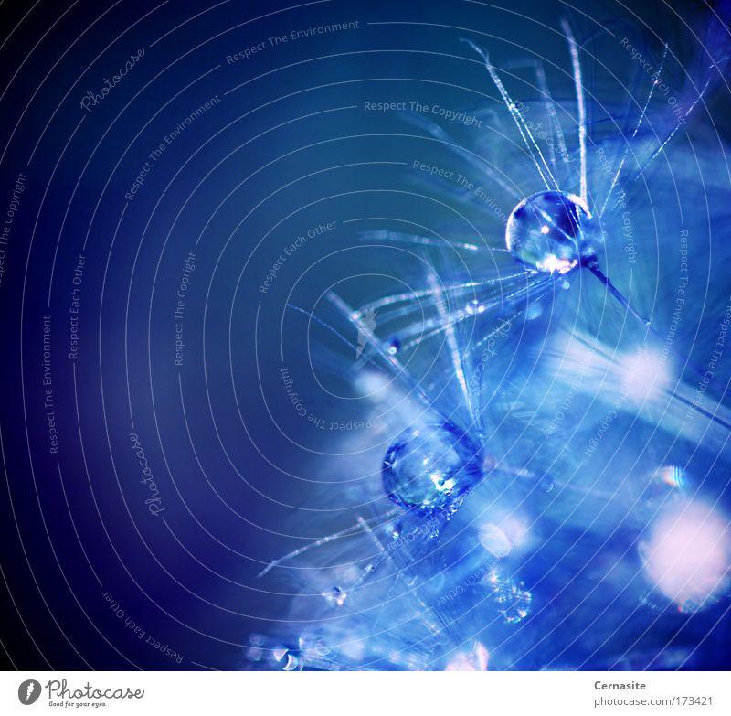Schließen V Farbfoto Außenaufnahme Nahaufnahme Detailaufnahme Makroaufnahme Experiment abstrakt Menschenleer Tag Licht Schatten Kontrast Silhouette