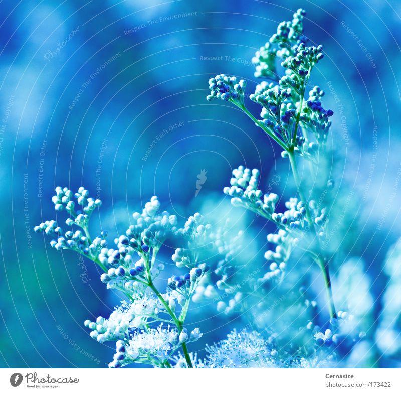 Himmel Natur blau weiß grün schön Pflanze Sommer Blume Umwelt Landschaft Wiese kalt Wärme Küste Blüte