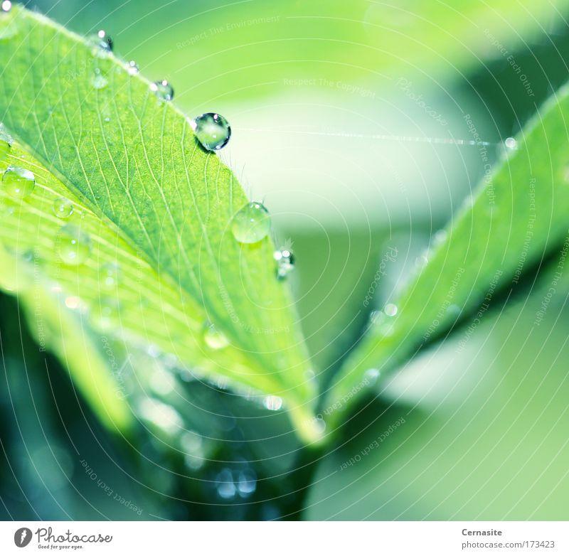 Natur grün schön Pflanze Sommer Blatt Umwelt Wiese Wärme Gras Küste Feld wild elegant frisch Wassertropfen