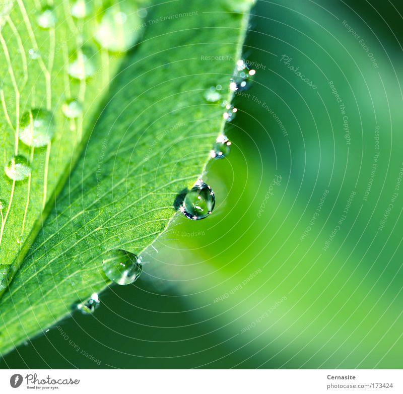 Natur grün schön Pflanze Sommer Blatt Umwelt Landschaft Wiese Wärme Gras Küste Park Regen Feld wild