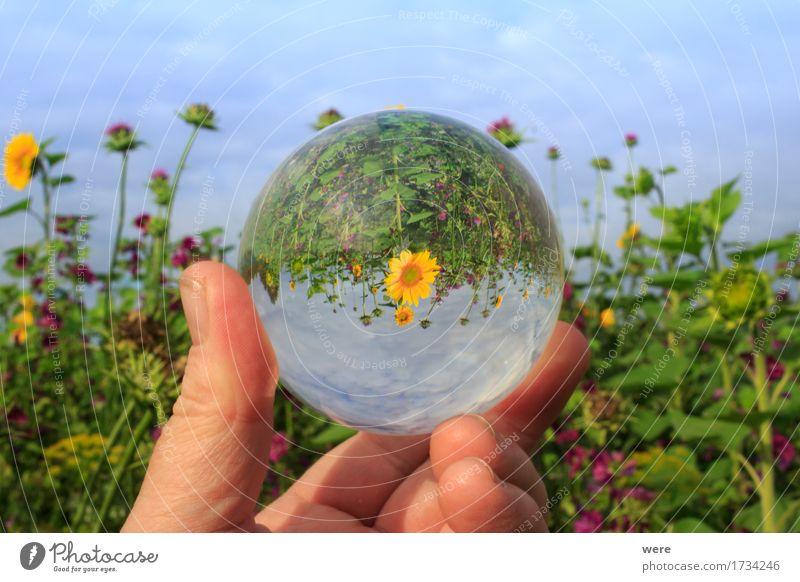 Guten Morgen Sonnenschein Natur Pflanze Sommer Blume Landschaft Blatt Tier Landwirtschaft Insekt Biene Umweltschutz Sonnenblume Forstwirtschaft Hummel Biotop