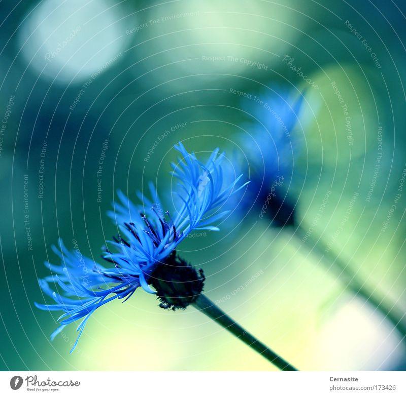 Natur blau schön Sommer Blume Landschaft gelb Wiese kalt Wärme Blüte Feld wild natürlich elegant frisch