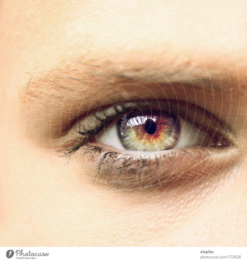 Glasklar Farbfoto Makroaufnahme Tag Blick Blick in die Kamera Blick nach vorn Mensch feminin Auge 1 ästhetisch hell schön Augenbraue Wimpern Regenbogenhaut