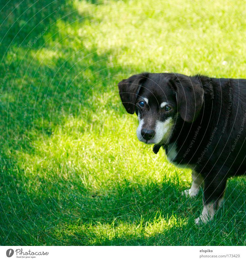 Wer bist du? Natur alt grün Tier Wiese Gras Hund Landschaft Fell Haustier
