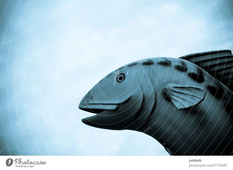 Mal Luft schnappen Himmel blau Tier kalt groß Fisch fantastisch Zoo trashig trocken Skulptur atmen Aquarium Angeln Umweltverschmutzung himmelblau