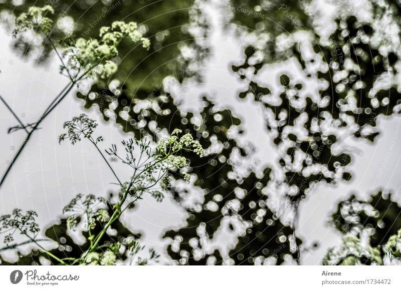 AST 9 | ein bisschen Wehmut Wasser Pflanze Gras Blatt Seeufer Teich dunkel nass natürlich trist grau grün ruhig Traurigkeit Trauer nachdenklich Schattenspiel