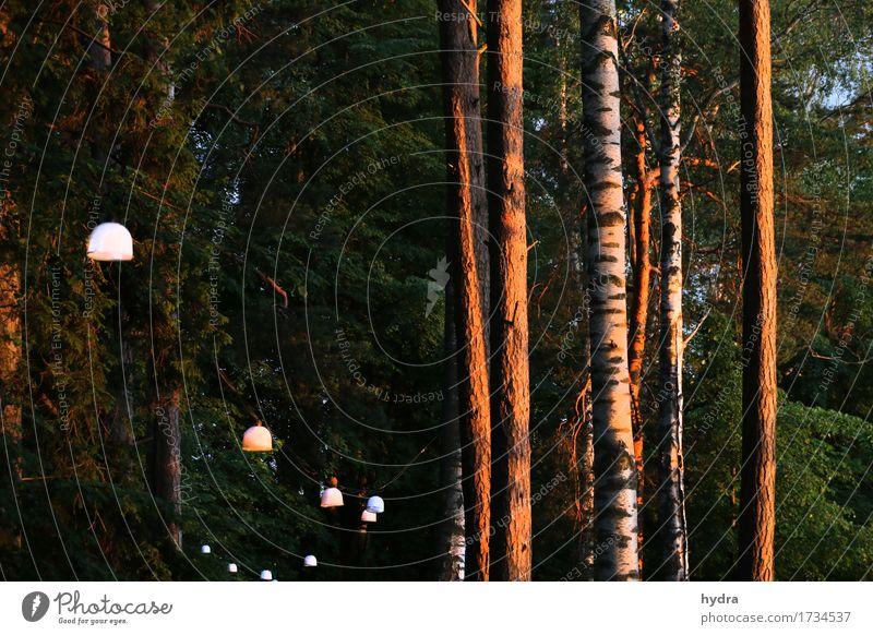 Waldpfad zur Badestelle Natur grün Baum Erholung ruhig Beleuchtung Wege & Pfade natürlich Garten Lampe Stimmung Design Park Zufriedenheit leuchten