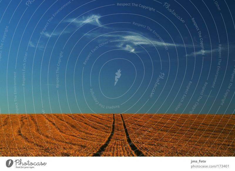 Die Wolke am Horizont Natur Himmel blau rot Sommer ruhig Wolken Feld Horizont Kornfeld Spuren Schönes Wetter Weizen Weizenfeld