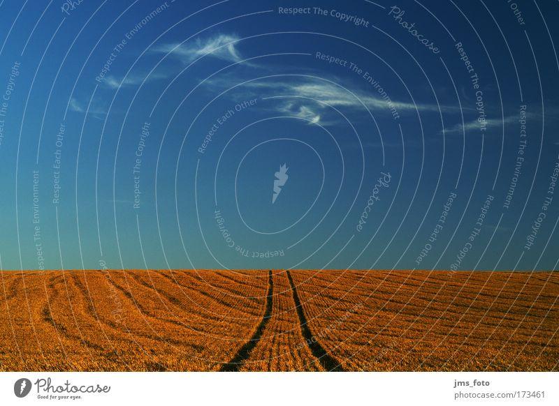 Die Wolke am Horizont Natur Himmel blau rot Sommer ruhig Wolken Feld Kornfeld Spuren Schönes Wetter Weizen Weizenfeld