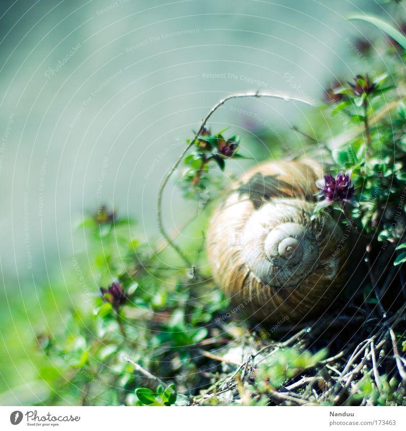 Kringeltier² Natur schön Sommer ruhig Tier Umwelt schlafen Romantik positiv Schnecke Spirale langsam Nutztier Schneckenhaus gedreht Weinbergschnecken