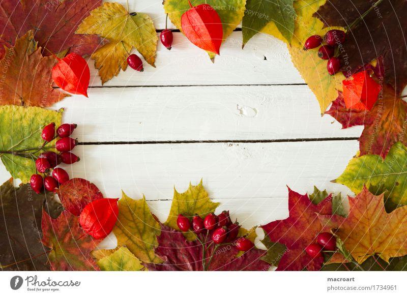 Herbst Herbstlaub herbstlich Ahornblatt Lindenblatt Hagebutten Frucht Physalis lamionfrucht Lampionblume orange Spitzahorn Farbe mehrfarbig Laubbaum Blatt
