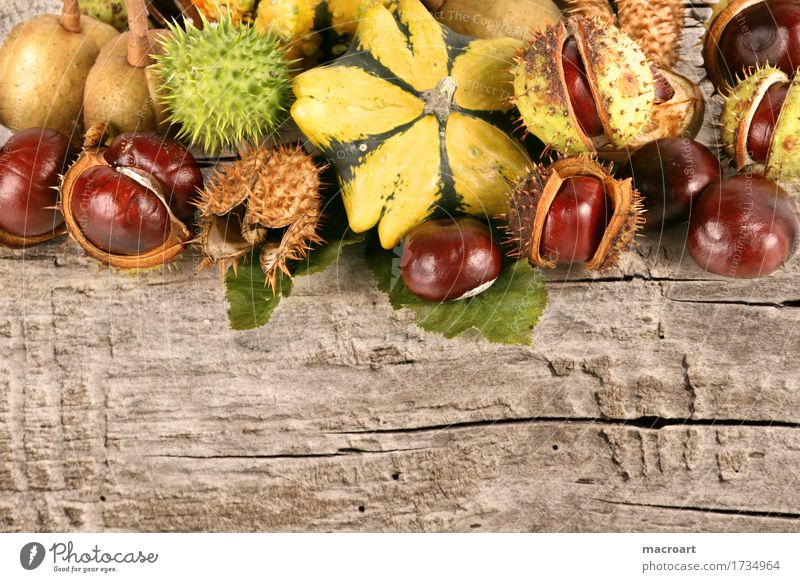 Herbst Frucht Engelstrompete Gift herbstlich Kürbis gelb grün rot Kastanie Nuss