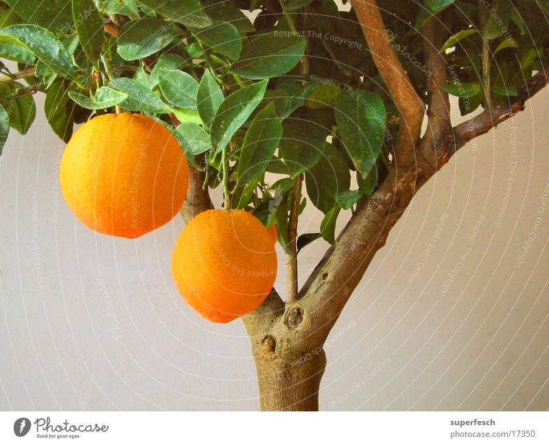 nimm 2 Baum Ernährung orange Frucht Obstbaum Ernte Doppelbelichtung Südfrüchte Zitrusfrüchte Orangenbaum