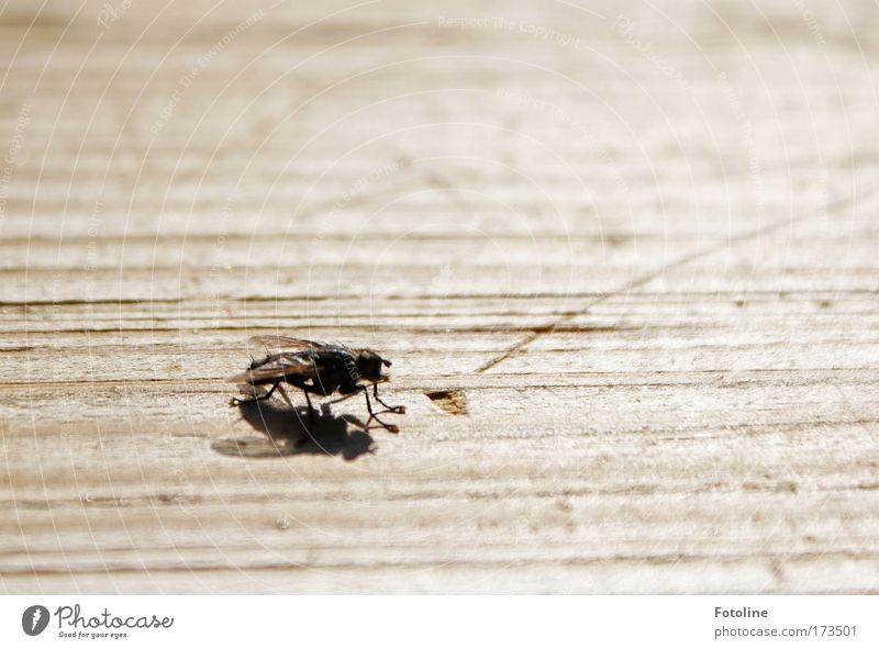 Bssssssssss Außenaufnahme Textfreiraum rechts Textfreiraum oben Tag Schatten Umwelt Natur Tier Sonne Sonnenlicht Sommer Schönes Wetter Wärme Wildtier Fliege