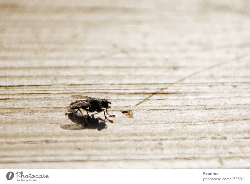Bssssssssss Natur Sonne Sommer Tier schwarz Umwelt Holz Wärme hell fliegen Wildtier Fliege Geschwindigkeit Flügel Schönes Wetter Holzbrett