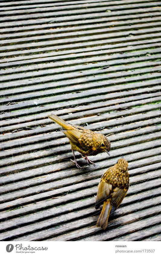 chit-chat Tier gelb Tierjunges Holz klein Vogel Feder Flügel Holzfußboden zierlich