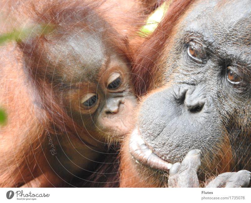 Borneo Tier Wildtier Tiergesicht 2 Tierjunges Tierfamilie Gefühle Vertrauen Sicherheit Schutz Geborgenheit Warmherzigkeit Sympathie Zusammensein Liebe Tierliebe