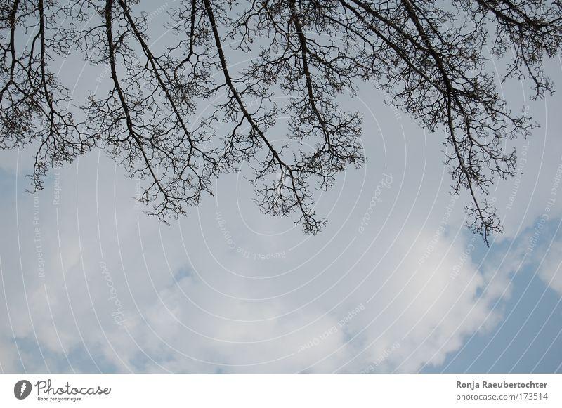 Wolkenkratzer Himmel Natur Baum Wolken Freiheit Holz Unendlichkeit