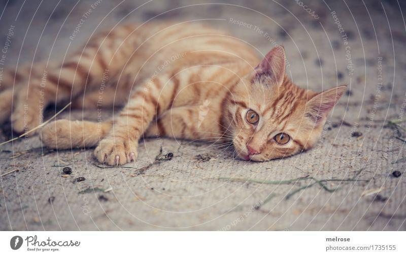 Mittagsschläfchen Katze Stadt schön weiß Erholung Tier Tierjunges klein braun Zufriedenheit liegen gold Perspektive genießen beobachten niedlich
