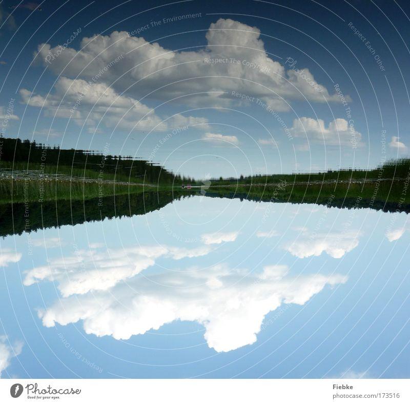 Spiegelwelt Farbfoto Außenaufnahme Textfreiraum oben Textfreiraum unten Tag Licht Umwelt Natur Landschaft Wasser Himmel Wolken Sommer Schönes Wetter Baum Küste