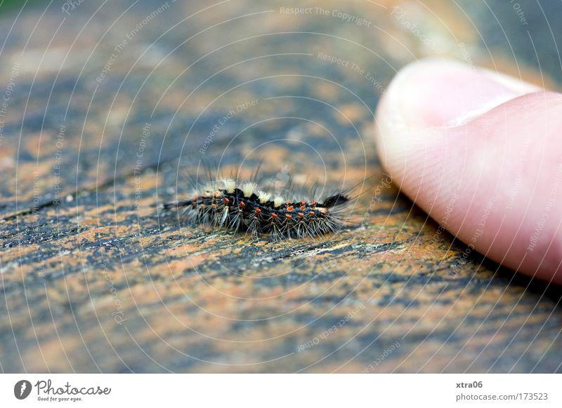 größenvergleich Tier klein Finger Fingernagel Raupe vergleichen