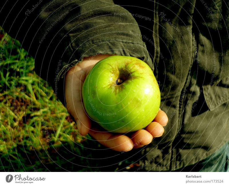 windows. Mensch Kind Natur Hand schön Umwelt Wiese Herbst Junge Garten Gesundheit Feld Kraft Frucht Kindheit Lebensmittel