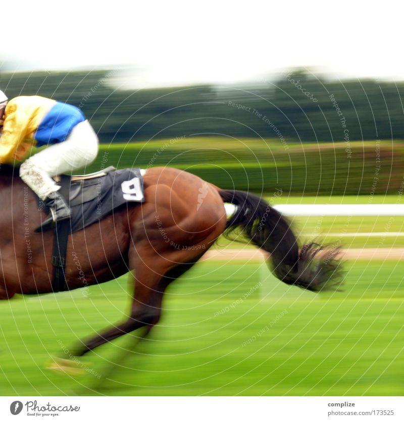 Bonanza Reitsport Wiese Feld Tier Pferd 1 Risiko Wette Pferderennen Sportveranstaltung Erfolg Geschwindigkeit Ziel endspurt Rennbahn zieleinlauf 9 Farbfoto