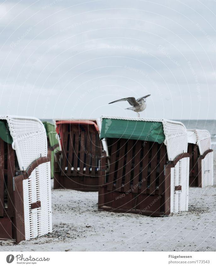 Ich mach denn mal nen Abflug... Farbfoto Außenaufnahme Tag Lifestyle Ferien & Urlaub & Reisen Ausflug Himmel Wellen Küste Seeufer Strand Nordsee Ostsee Meer