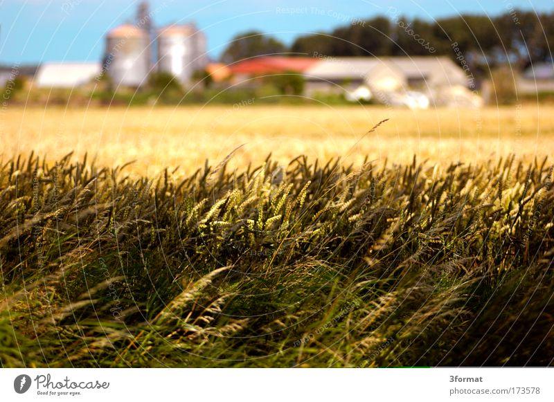 LPG Himmel blau hell Feld Bauernhof heiß Dorf Landwirtschaft Tiefenschärfe Am Rand Nachmittag Straßenrand Mittag Silo August