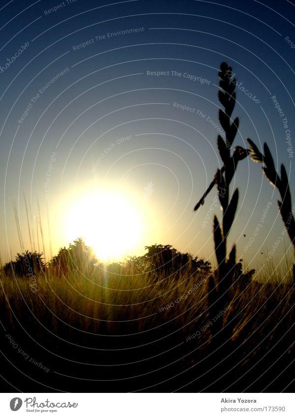 Der Sonne entgegen II Farbfoto Außenaufnahme Menschenleer Textfreiraum links Abend Dämmerung Licht Schatten Kontrast Silhouette Sonnenlicht Sonnenstrahlen