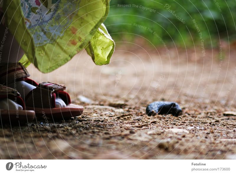 Kleine Forscherin Natur Pflanze Tier Umwelt Landschaft Gras Sand Erde Wildtier lernen Schönes Wetter entdecken Schnecke hocken Nacktschnecken