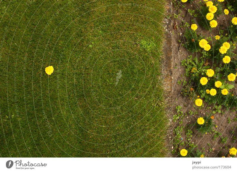 Einzelgänger Natur Blume Pflanze Sommer Einsamkeit Blüte Gras Garten Park Erde einzigartig Lebewesen Grenze Schönes Wetter Beet selbstbewußt