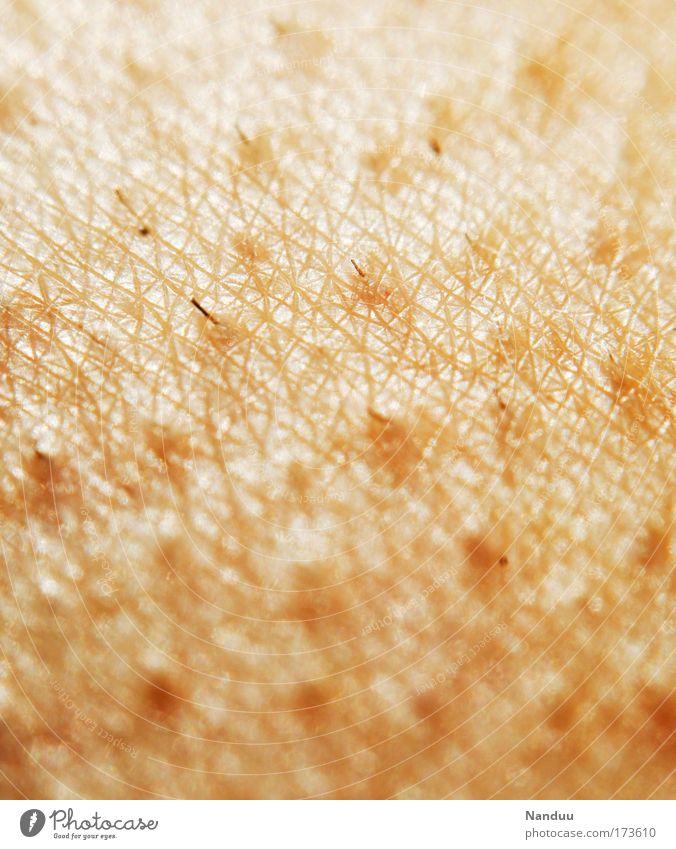 empfindsam kalt Gefühle Haut gruselig frieren sensibel Gänsehaut Stoppel Haare & Frisuren Härchen