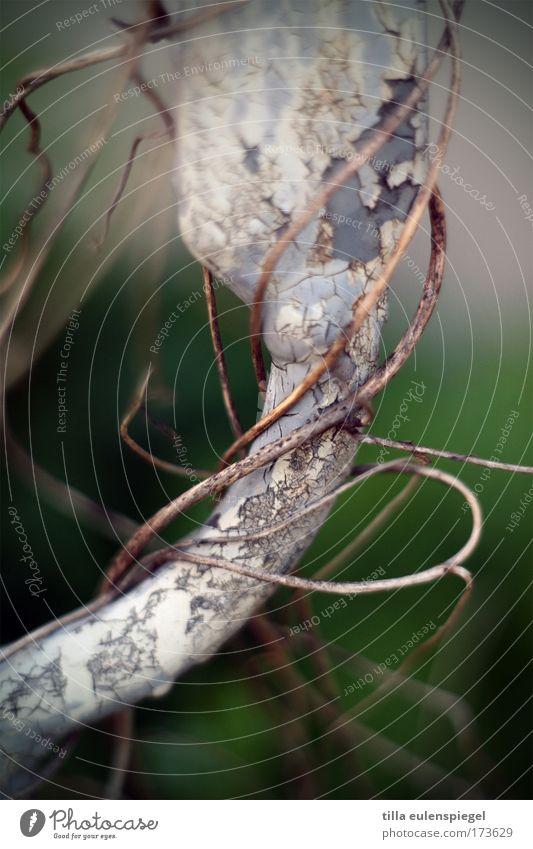 verwirrt Bewegung Umwelt Wachstum Unendlichkeit Tor Verfall Vergangenheit Geländer verloren durcheinander verblüht Efeu Kletterpflanzen dehydrieren umwickelt
