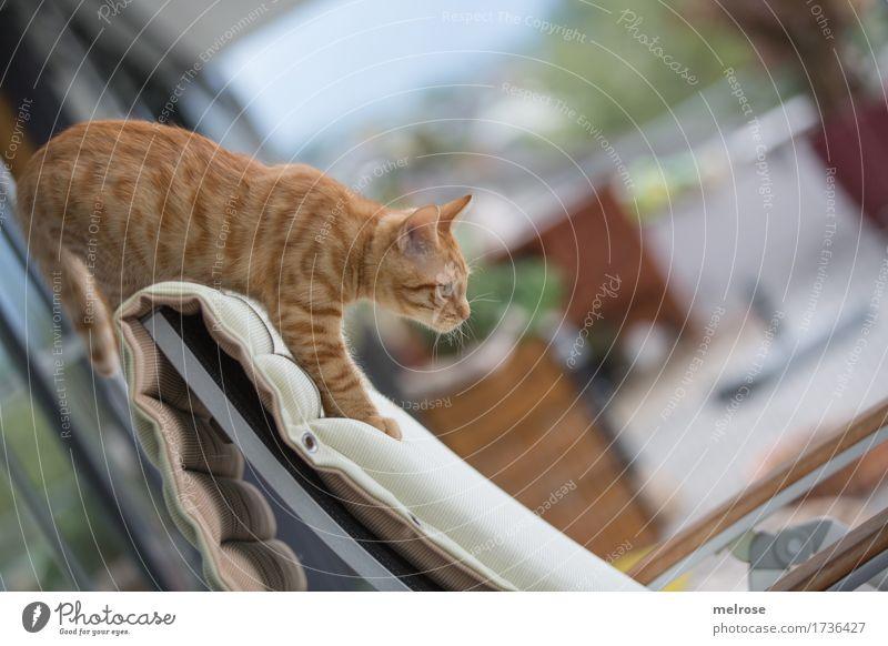 Soll ich? Katze Himmel Pflanze Sommer weiß Tier Tierjunges klein Garten braun springen elegant sitzen stehen Perspektive beobachten