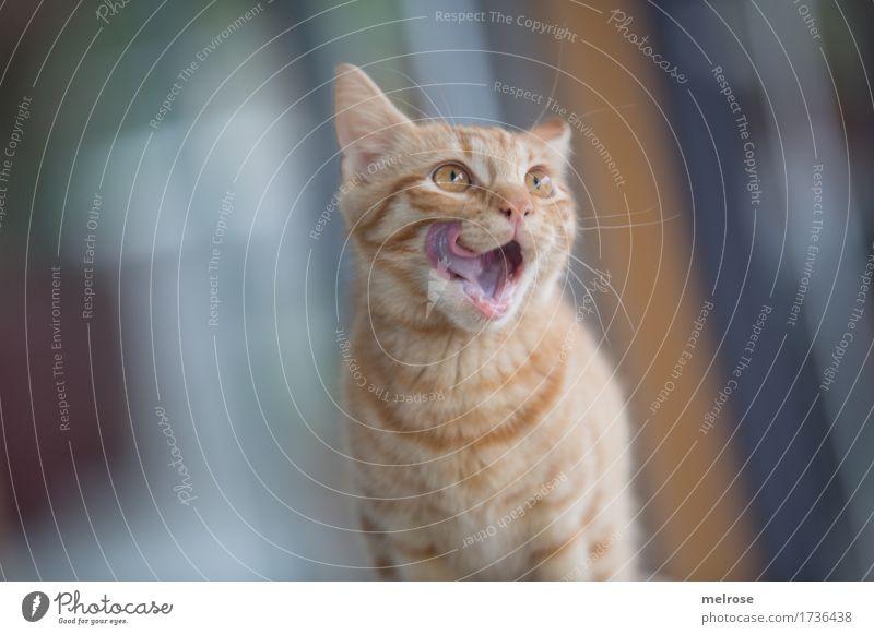Schleckermäulchen Katze weiß Tier Tierjunges gelb klein braun wild sitzen beobachten niedlich weich Neugier Zähne Fell Appetit & Hunger