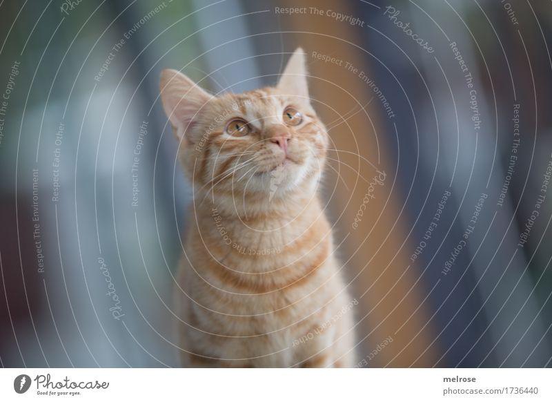 Was issn da oben los? Katze Stadt blau schön grün weiß Tier Tierjunges braun sitzen beobachten niedlich weich Freundlichkeit Neugier entdecken