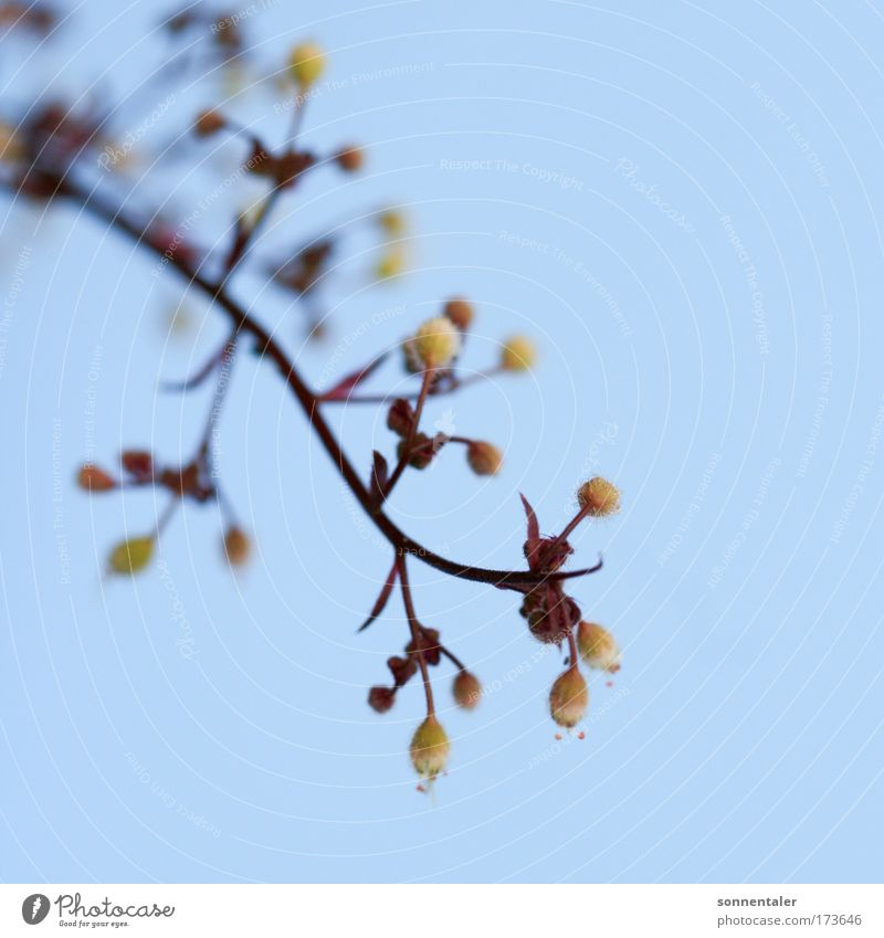 ins blaue geraten Natur Himmel Blume Pflanze braun klein Sträucher fein filigran geschwungen hell-blau