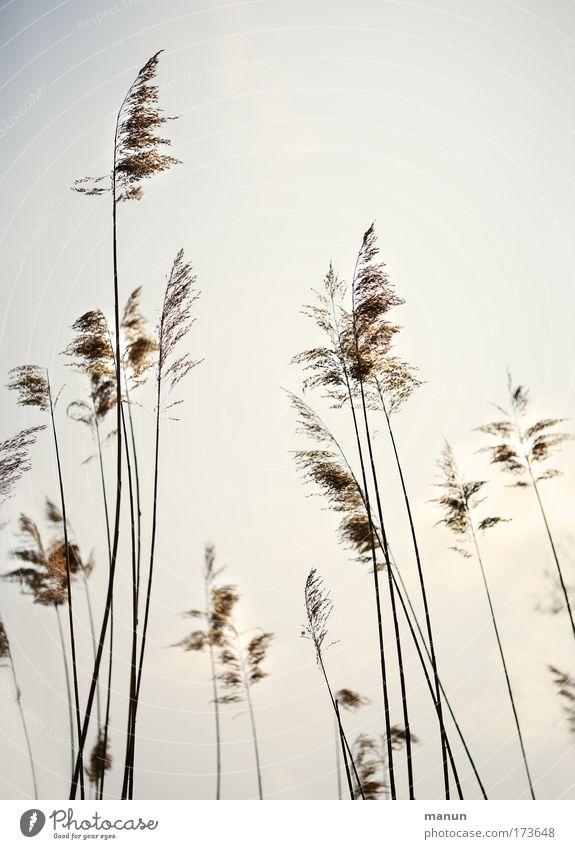 air brush Natur Pflanze Sommer ruhig Erholung Stil See hell Umwelt Sträucher natürlich Schilfrohr Seeufer Umweltschutz Wildpflanze