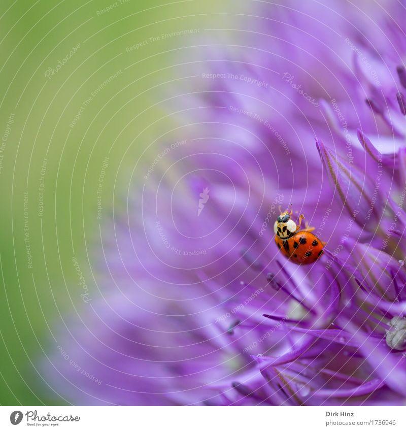 Nahrungssuche Umwelt Natur Pflanze Tier Blume Blüte Garten Park Wildtier 1 Blühend entdecken Essen Duft schön stachelig grün violett Neugier Appetit & Hunger