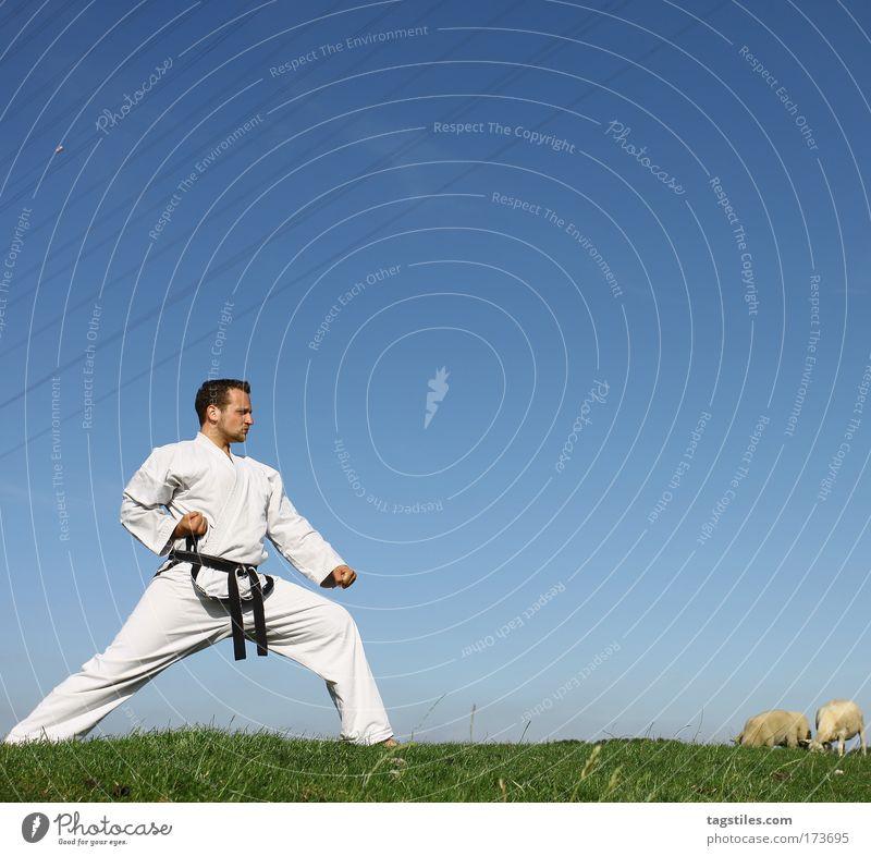 HIT THE ROAD, JACK Mann schwarz Kraft Körperhaltung stark Typ Kontrolle Schaf kämpfen Kerl Schlag Gürtel Krallen Kampfsport Defensive