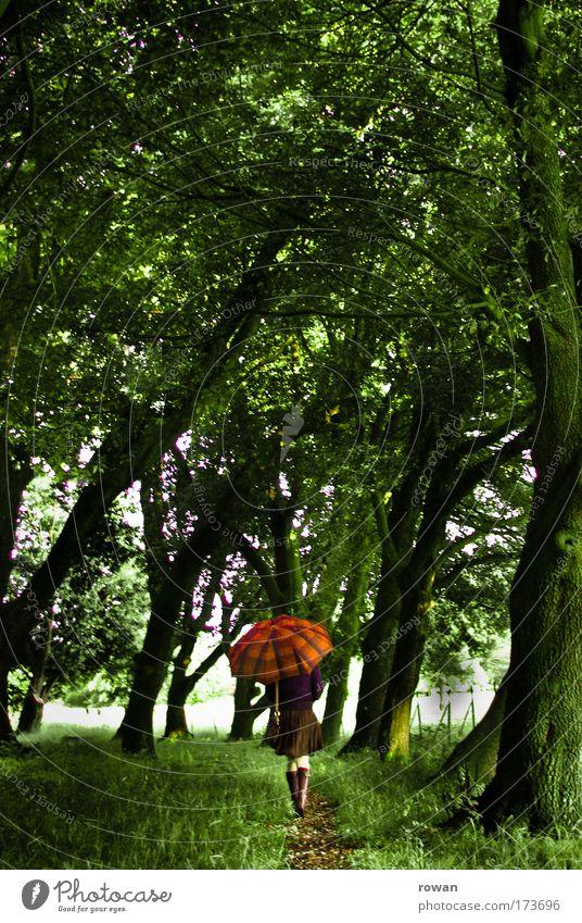 regenspaziergang Frau Mensch Natur Jugendliche Baum grün Wald kalt feminin Gras träumen Traurigkeit Wege & Pfade Park Regen Landschaft