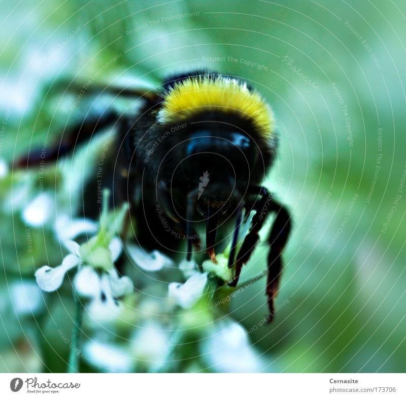 Natur grün schön Pflanze Sommer Blume Tier gelb dunkel Ernährung Wiese Wärme Blüte Luft hell Feld