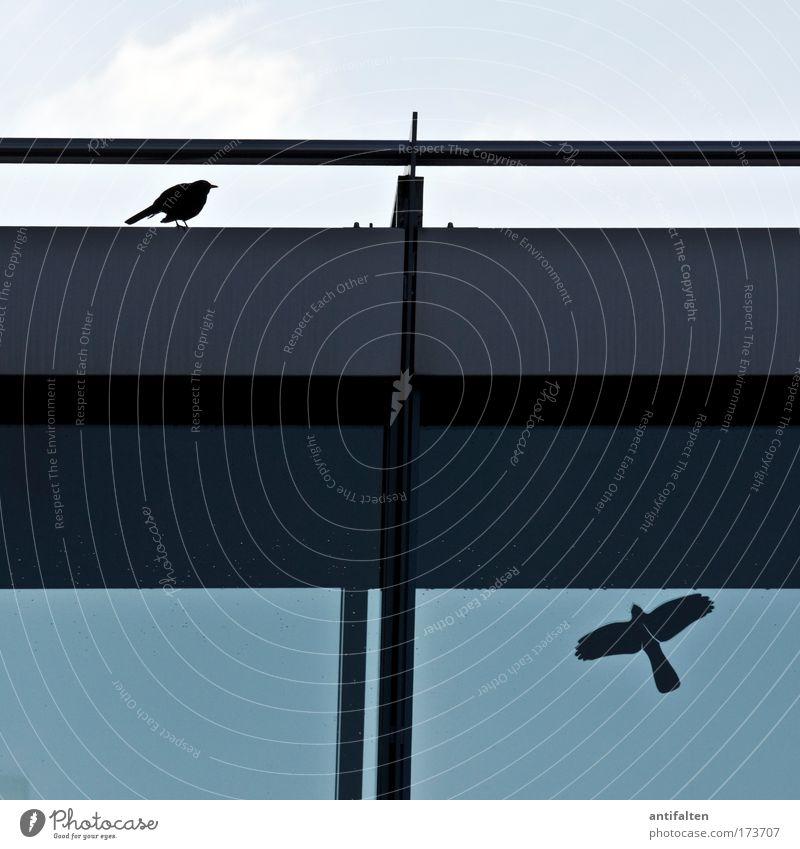 Echt und unecht Tier Vogel Flügel Amsel 1 Etikett Zeichen fliegen sitzen authentisch einfach frei lustig blau grau schwarz Leben Freiheit Natur rein skurril