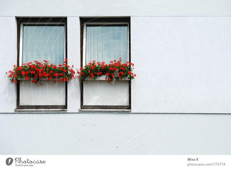 hallo Nachbar Häusliches Leben Haus Pflanze Blume Topfpflanze Mauer Wand Fenster einfach trist weiß Langeweile Pelargonie Gardine Fassade Etage Nachbarhaus