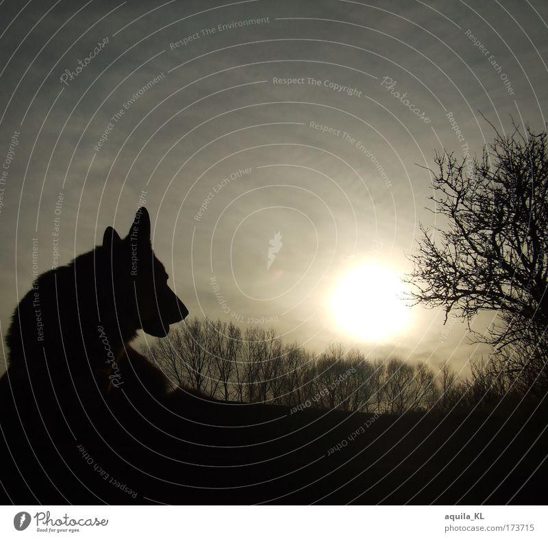 in loving memory of Udo Himmel Hund Natur Baum Sonne Tier schwarz dunkel grau Horizont Ast Idylle Haustier Nutztier Geäst Sonnenstrahlen
