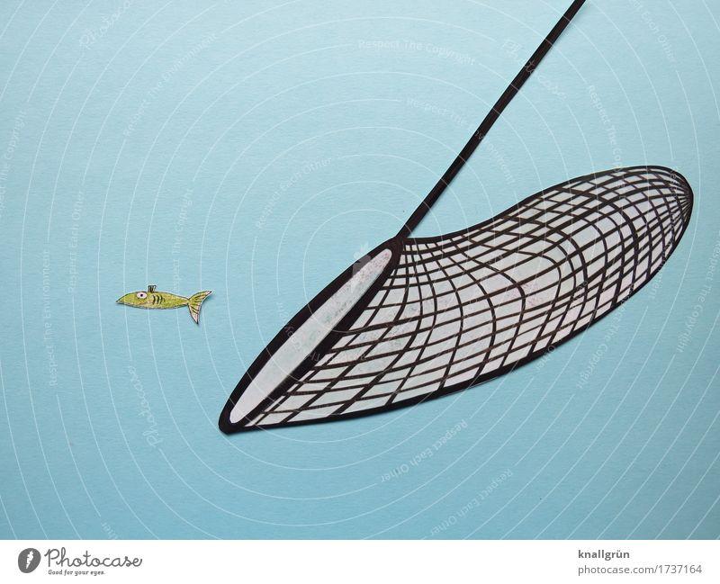Überfischung Tier Fisch 1 Netz Kescher gebrauchen bedrohlich blau grün schwarz Gefühle Stimmung Verantwortung vernünftig Sorge Zukunftsangst gefährlich