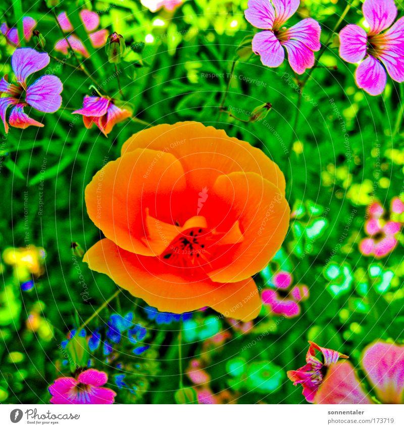 auf der wies´n Farbfoto mehrfarbig Außenaufnahme Nahaufnahme Makroaufnahme Tag Schatten Kontrast Schwache Tiefenschärfe Totale Umwelt Natur Pflanze Sommer Blume