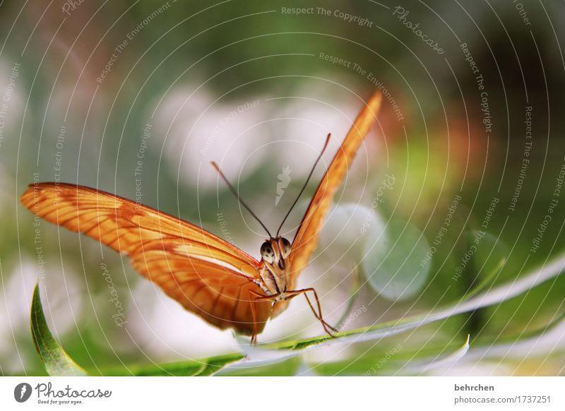 ja, es ist ein schmetterling:) Natur Pflanze Tier Baum Sträucher Blatt Garten Park Wiese Wildtier Schmetterling Tiergesicht Flügel 1 beobachten Erholung fliegen